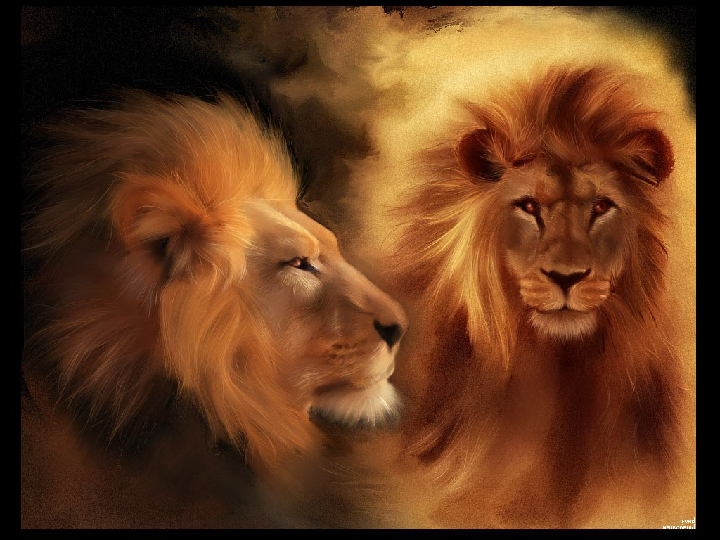 King Lion Pictures - Fonds D Écran Animaux , HD Wallpaper & Backgrounds