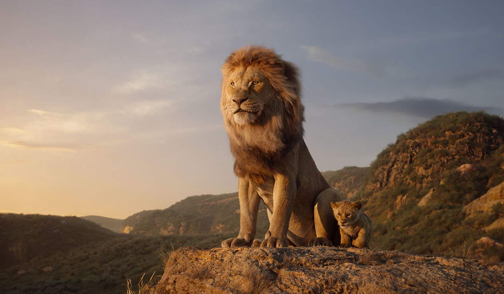 Simba Lion King 2019 , HD Wallpaper & Backgrounds