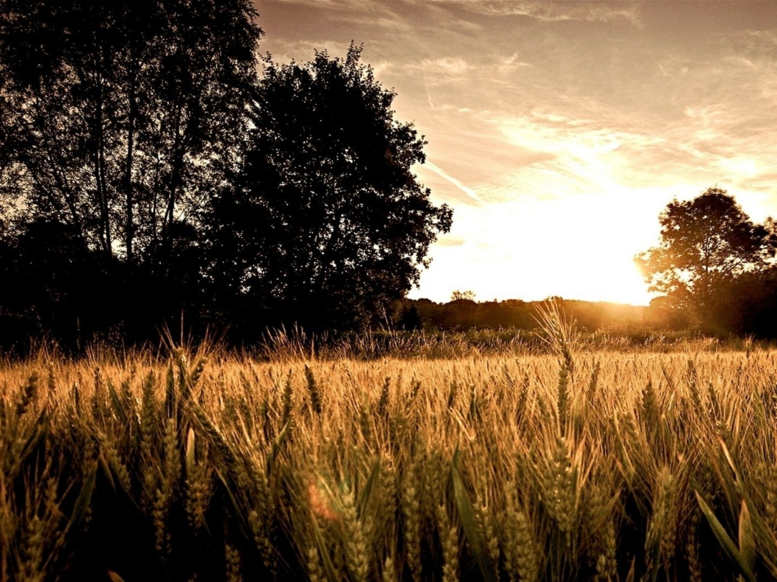 Weizen-feld Dunkle Bäume & Sun Wallpapers And Stock - Nature Landscape Oil Painting , HD Wallpaper & Backgrounds