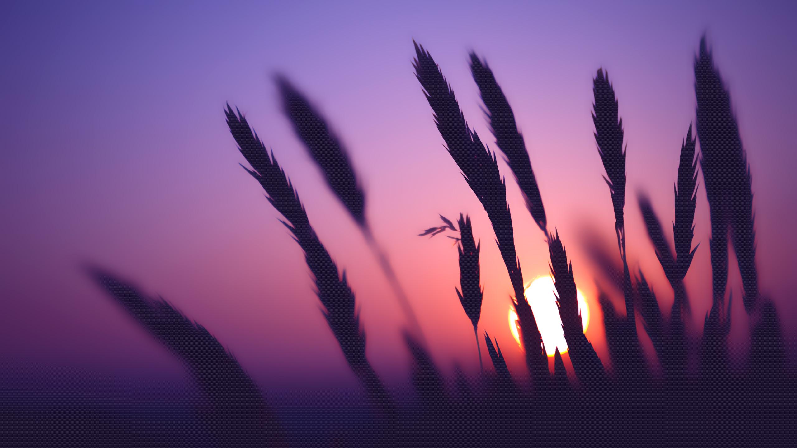 More Nature Desktop Wallpapers Purple Sunset Background Hd 1289806 Hd Wallpaper Backgrounds Download
