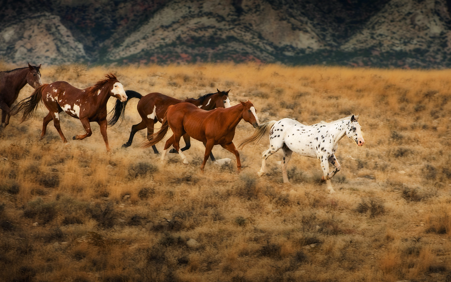 Blondeprincess Pinkmare And Jessowey Images Wild Horses Wild Horses 1293388 Hd Wallpaper Backgrounds Download