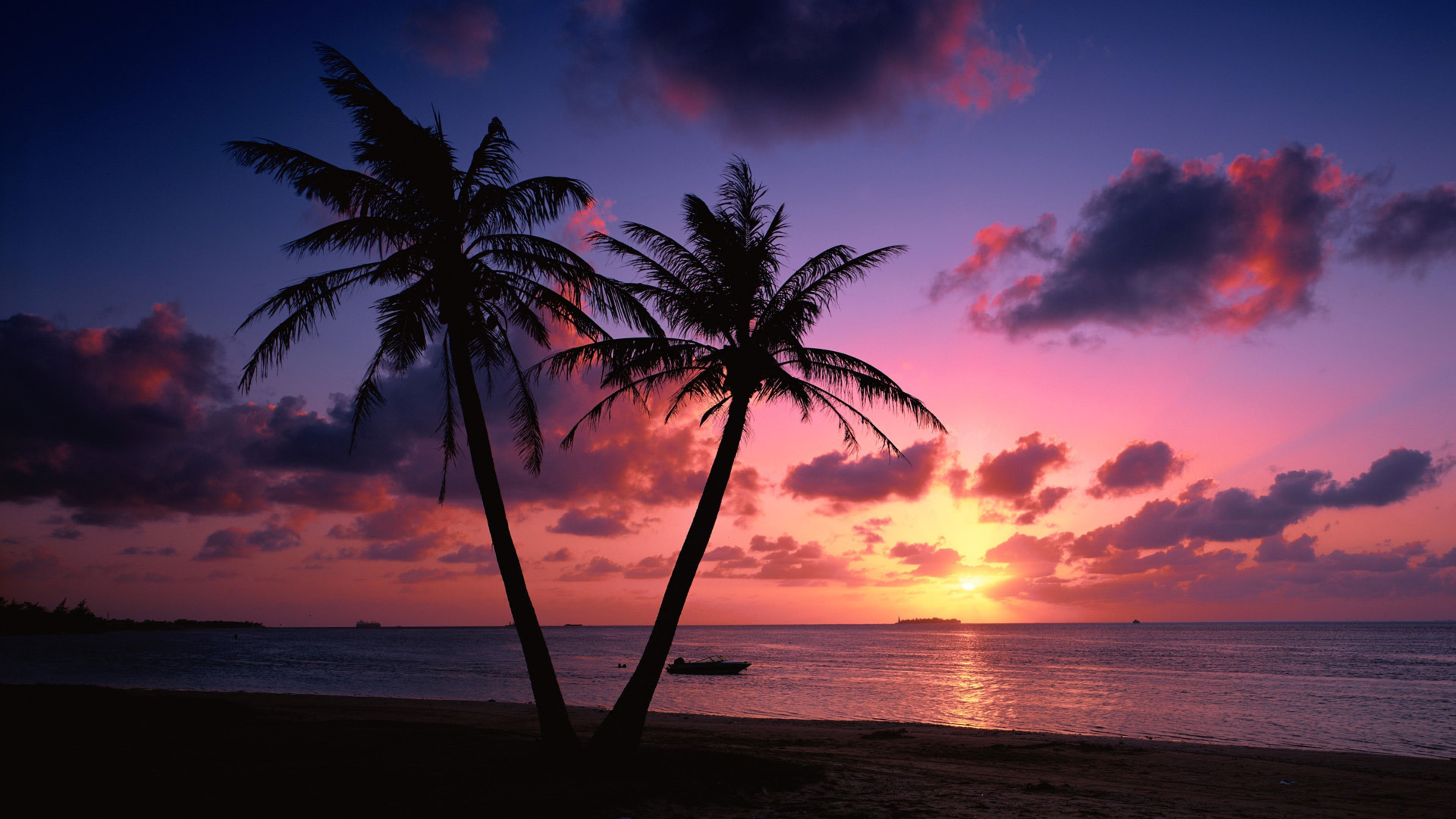 Beach Sunset Live Wallpaper ,goa, India - Palm Tree Beach Sunset , HD Wallpaper & Backgrounds