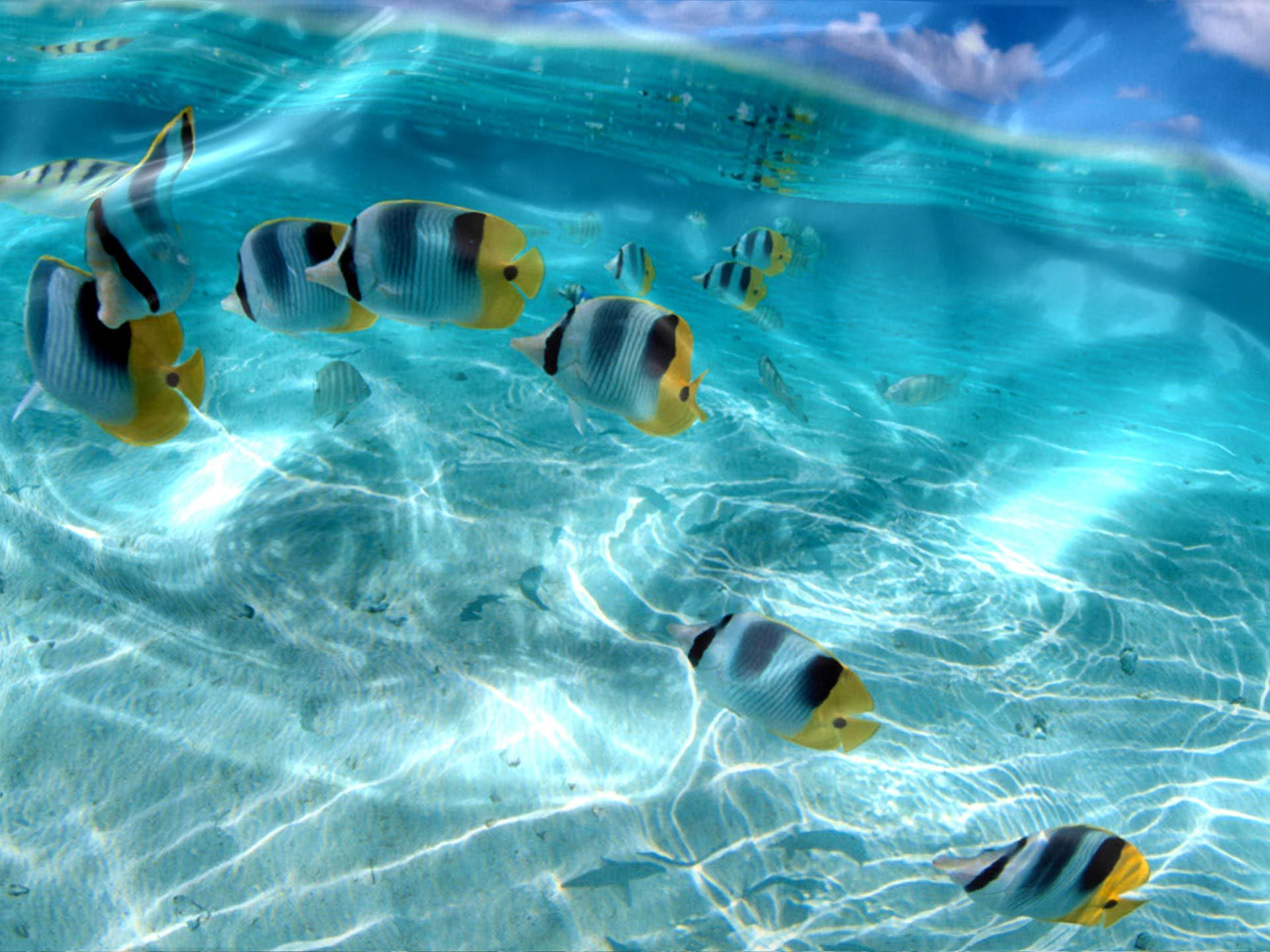 Live Wallpaper Fish In Water Desktop Free Live 134021