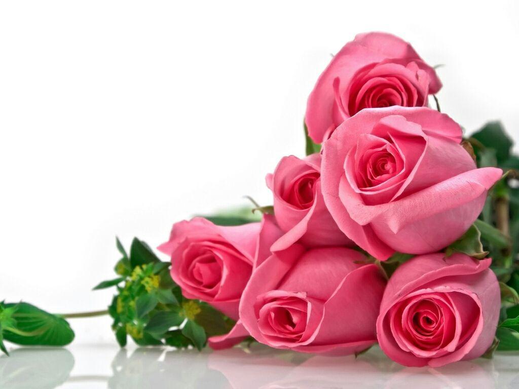 Beautiful Rose Flowers Hd Ee Download Beautiful Rose - Beautiful Rose Flower Wallpaper Free Download , HD Wallpaper & Backgrounds