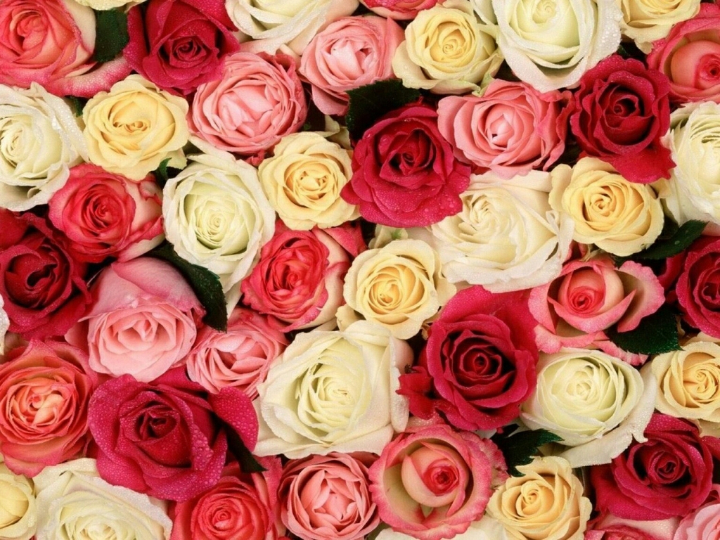 Beautiful Rose Flowers Wallpapers - Beautiful Wallpapers Of Flowers Roses , HD Wallpaper & Backgrounds