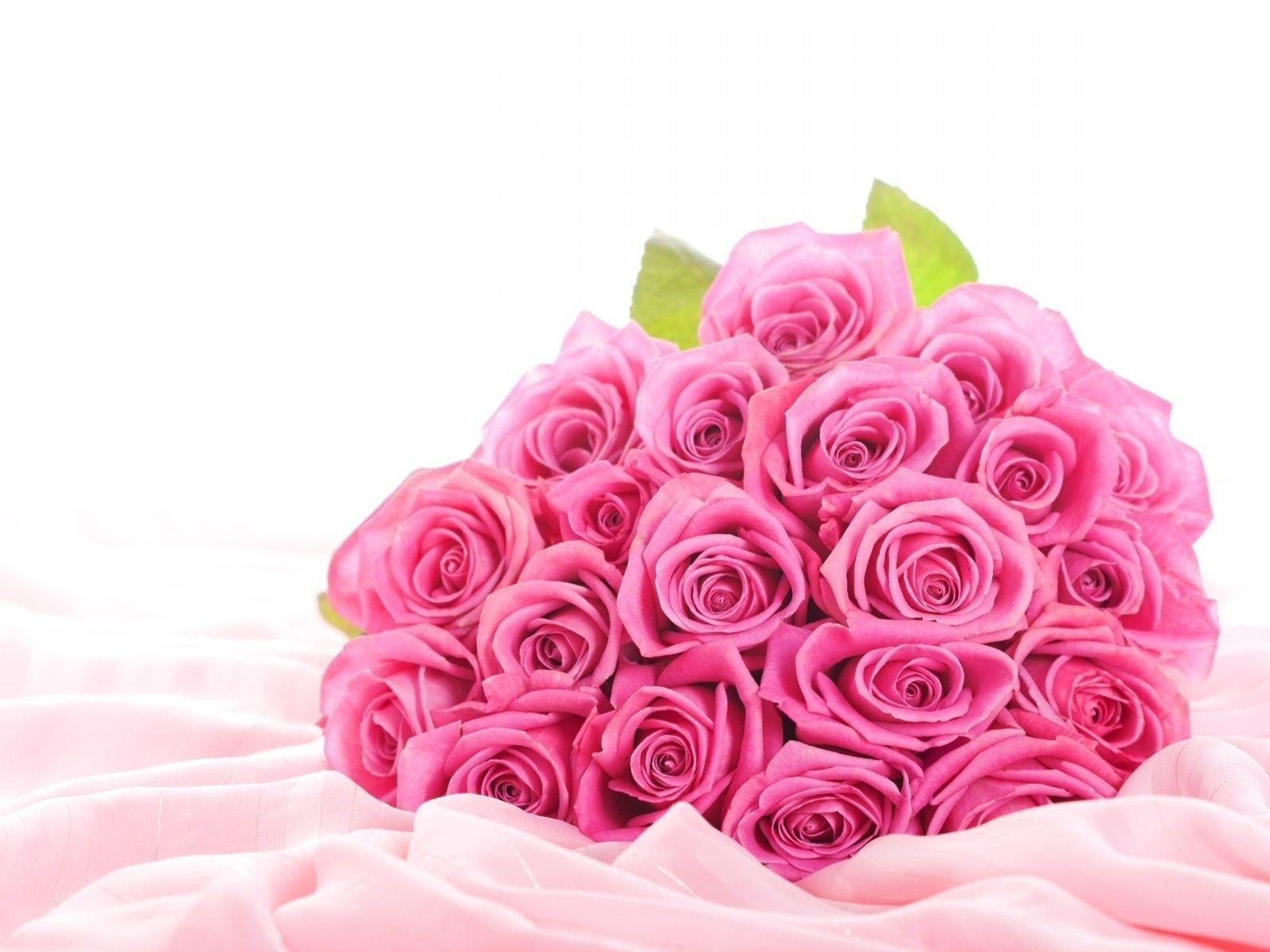 Desktop Of Pink Roses Hd Flower Wallpaper Cool Rose - Beautiful Pink Rose Flower , HD Wallpaper & Backgrounds