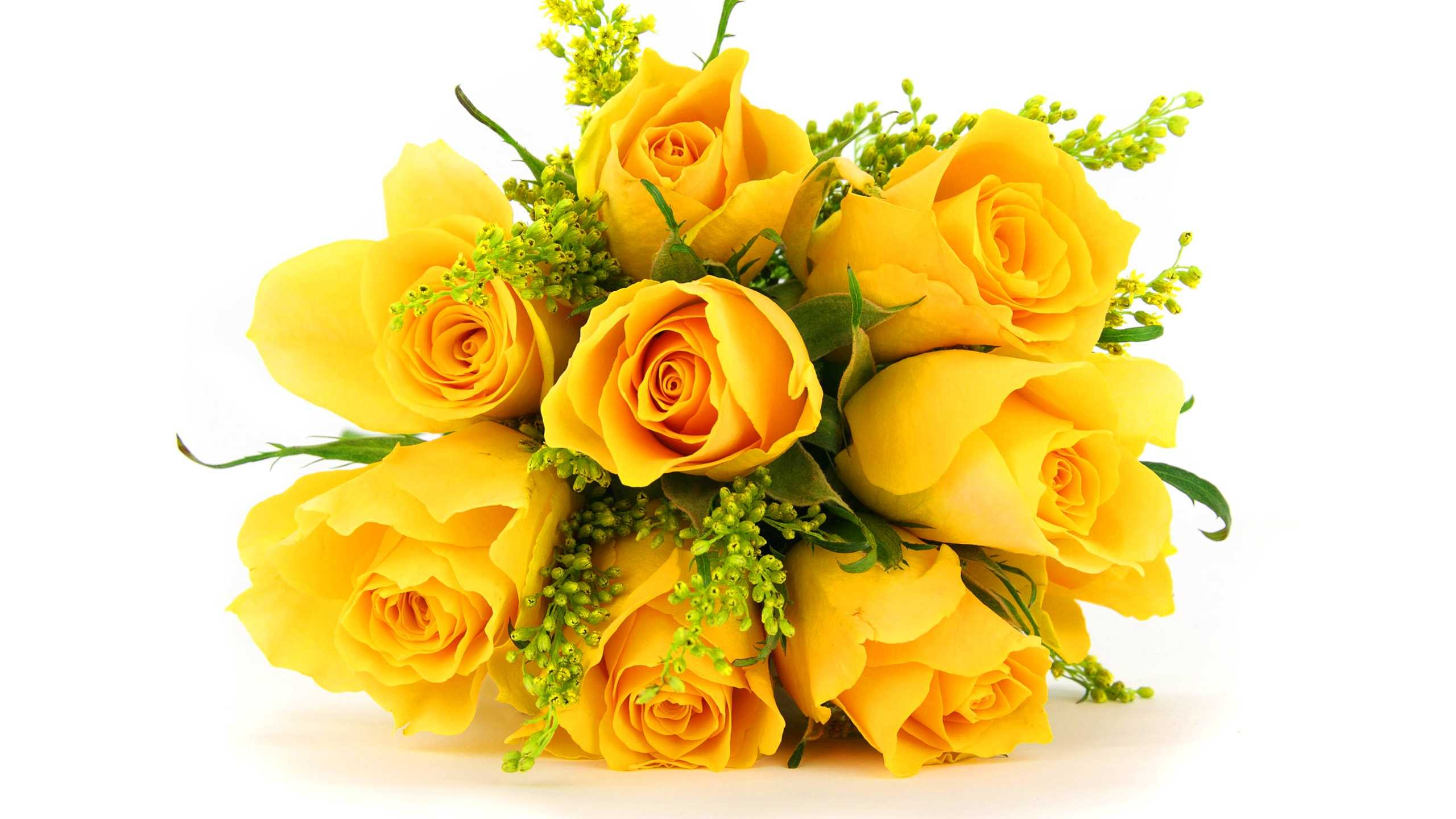 Yellow Rose Hd Images Download , HD Wallpaper & Backgrounds