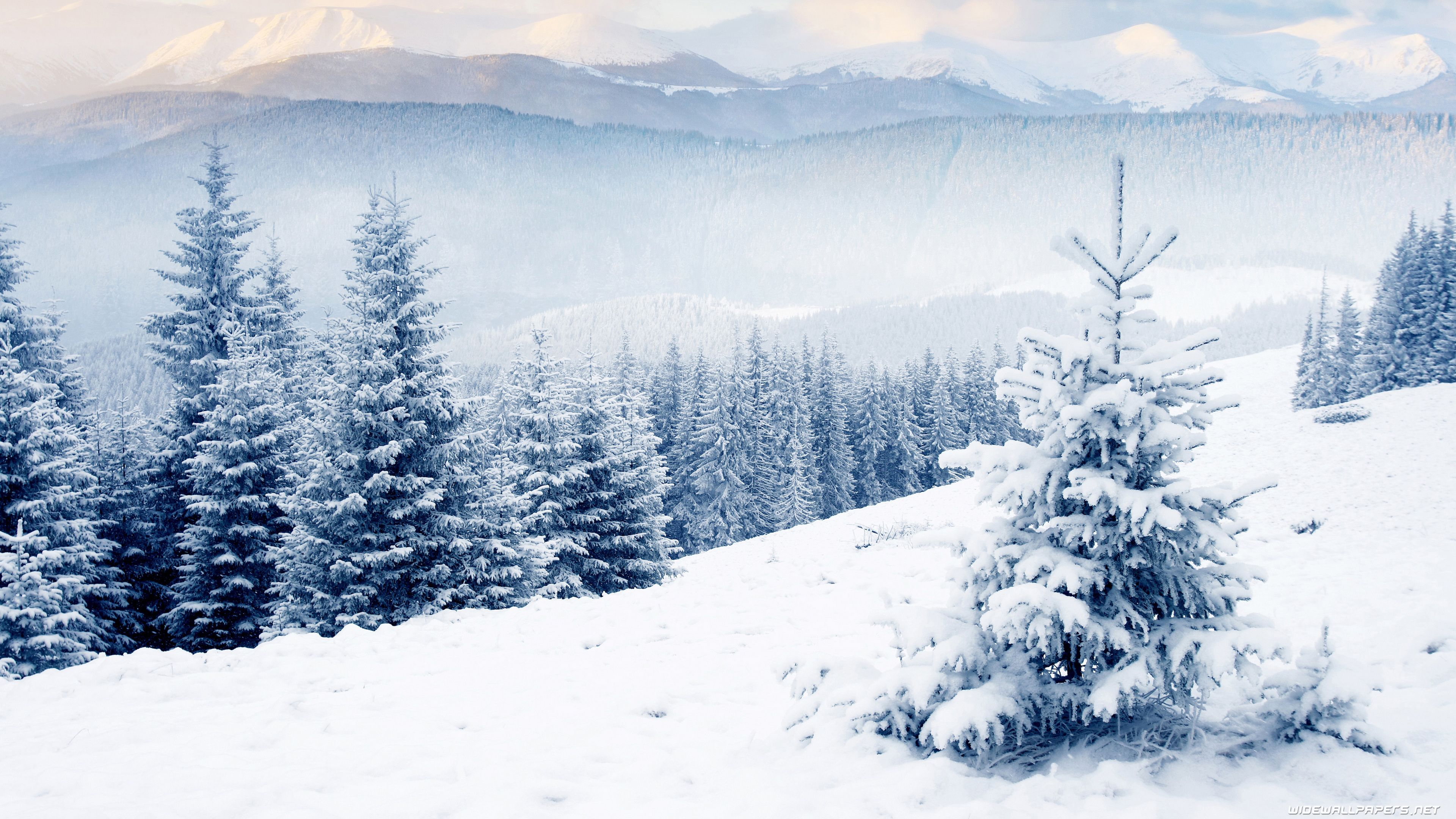 Free Winter Wallpapers Hd Winter Desktop Wallpaper 4k