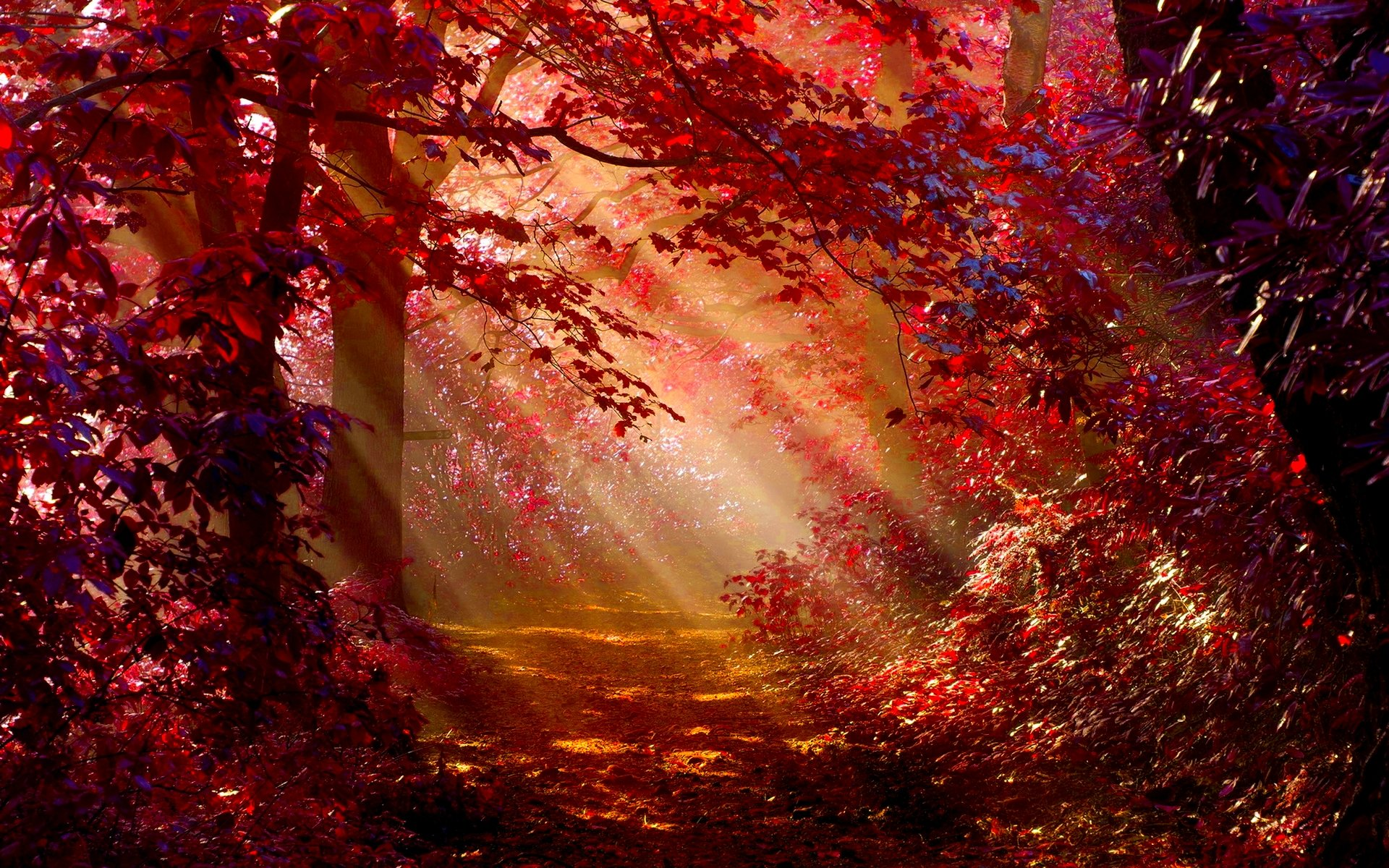 Sunlight In Autumn Forest Forest Wallpaper Autumn 137392