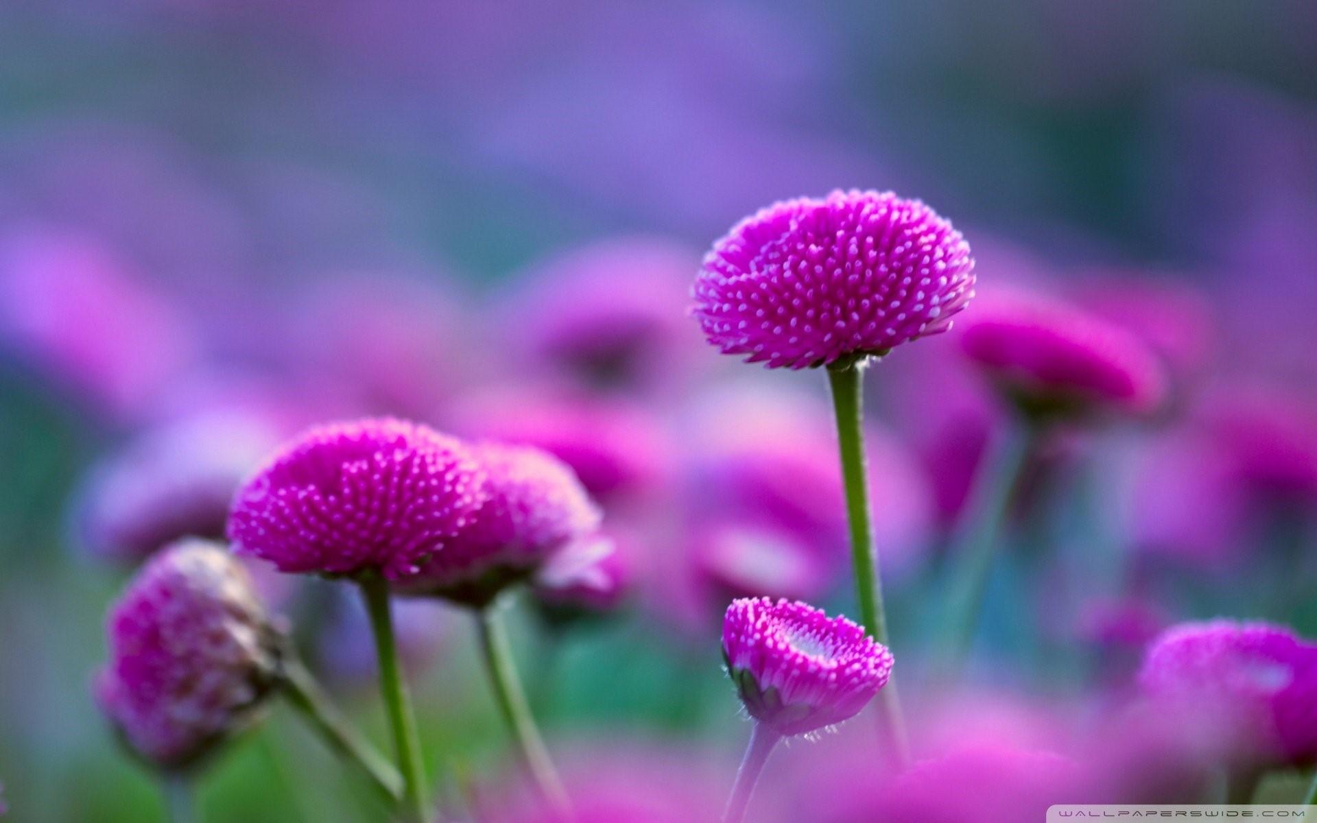 Beautiful Flowers Nature Wallpaper Hd 12 Widescreen - Flower Beautiful Pictures Of Nature , HD Wallpaper & Backgrounds