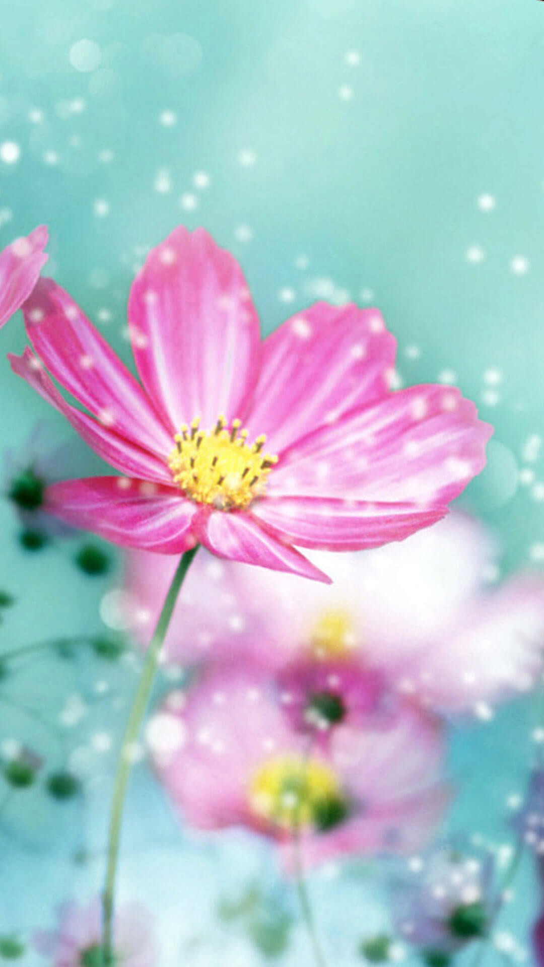 Spring Flower Iphone 6 Wallpaper Hd - Spring Flowers Wallpaper For Iphone , HD Wallpaper & Backgrounds