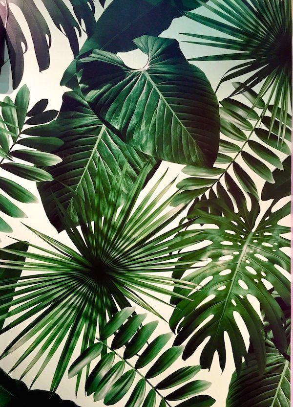 Flavor Paper Wild Thing Print Wallpaper, Botanical - Обои На Телефон Листья Пальмы , HD Wallpaper & Backgrounds