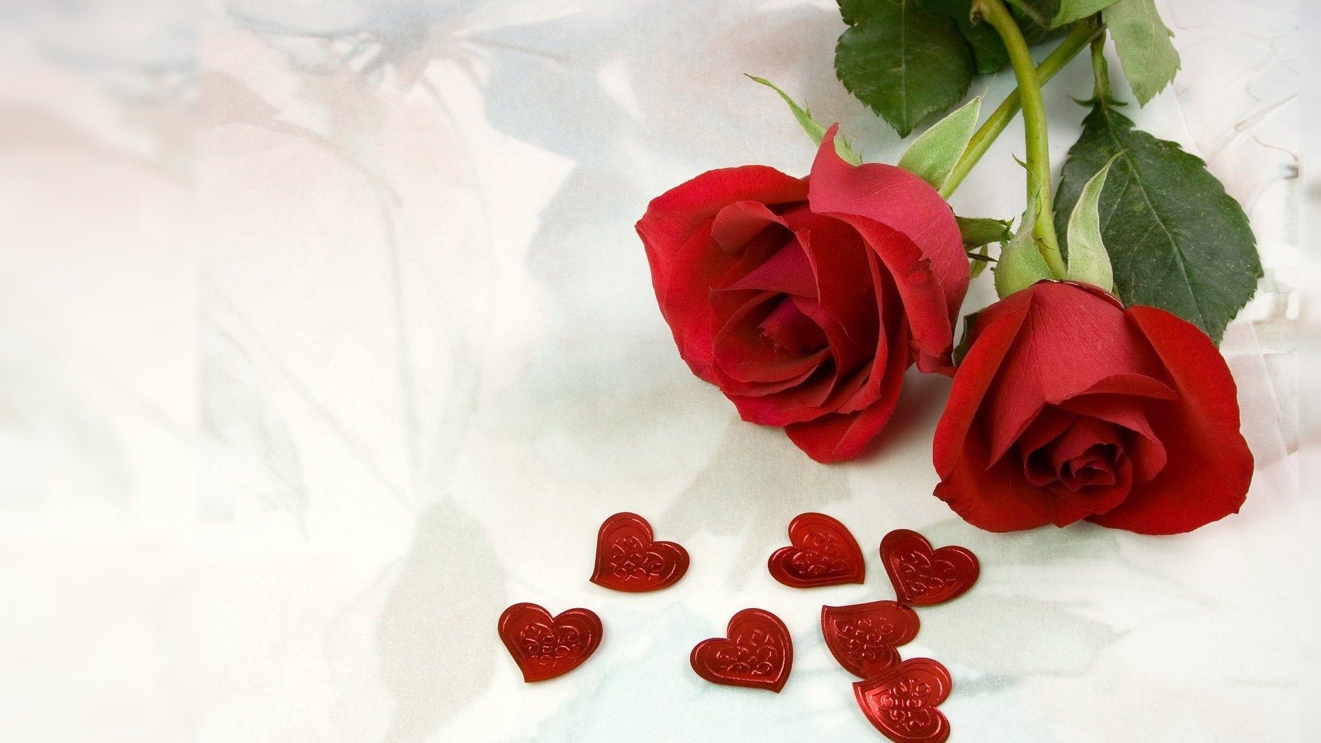 Red Roses, Most Popular Rose, Rose Wallpapers, Beautiful - Red Rose With Love Quotes , HD Wallpaper & Backgrounds