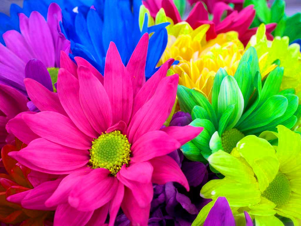 Flowers Wallpapers Colourful Flowers Hd Desktop Background