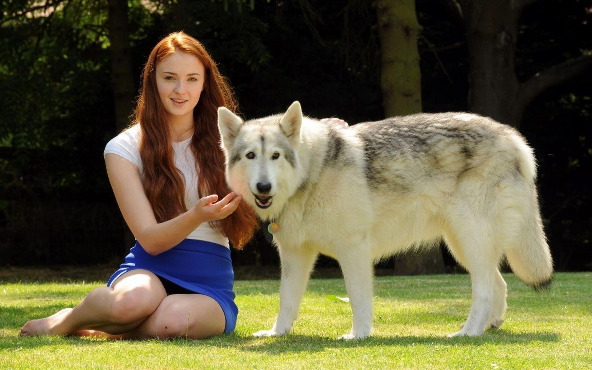 Sophie Turner Direwolf Wolves Wallpaper Game Of Thrones