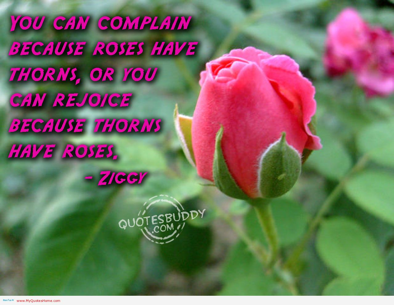 Rose Flower Quotes Images - Beauty And Flower Quote , HD Wallpaper & Backgrounds