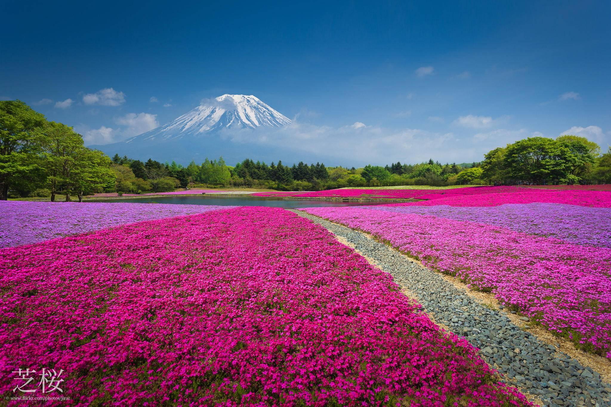 Mt Fuji Beautiful Landscape In Japan 1349233 Hd Wallpaper Backgrounds Download