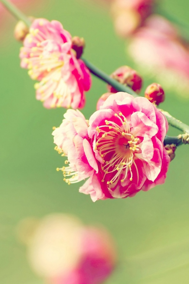Download Now - Flowers 1600 X 900 , HD Wallpaper & Backgrounds