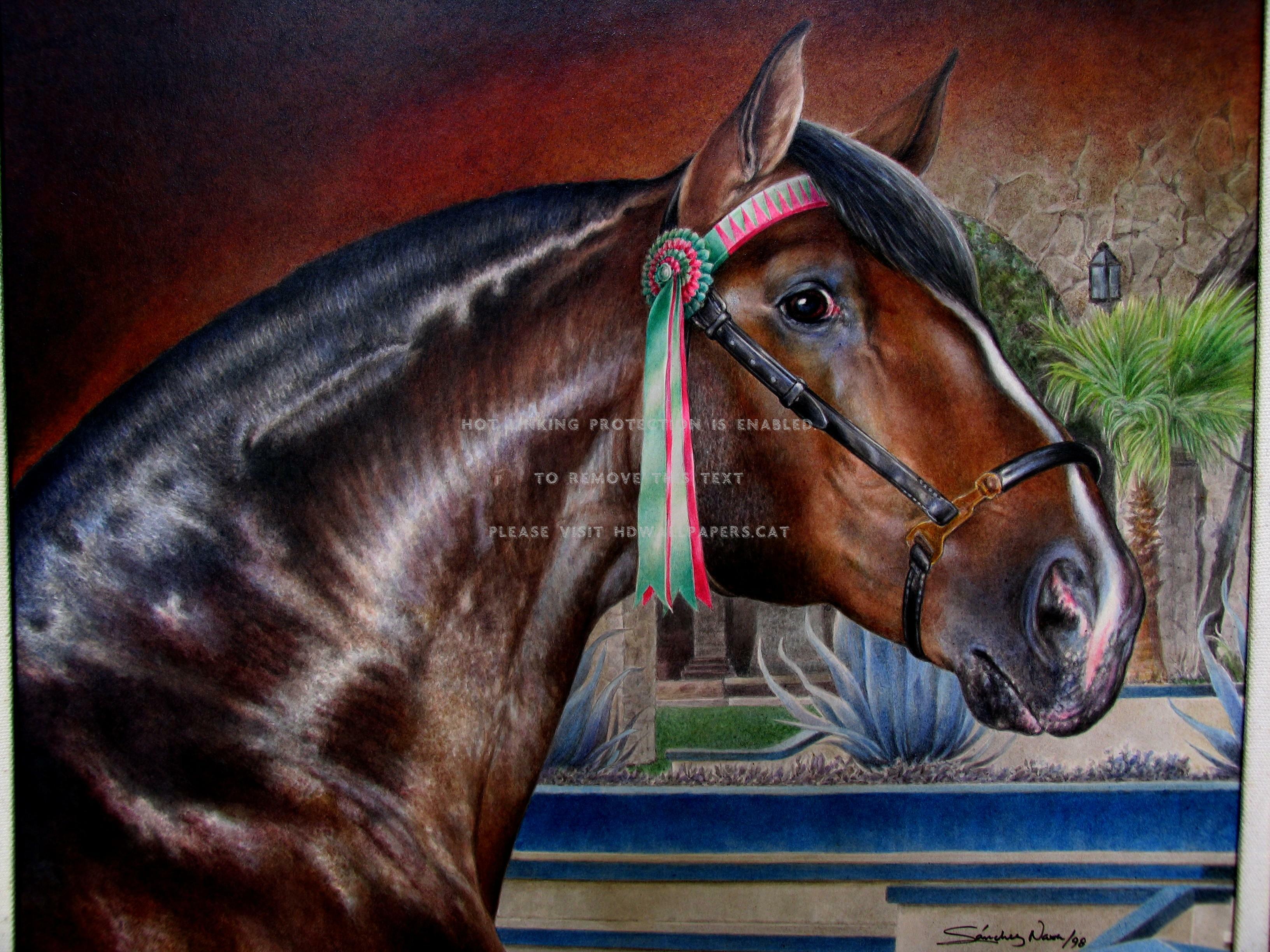 Xperto Dos Cavaleiros 1379925 Hd Wallpaper Backgrounds Download