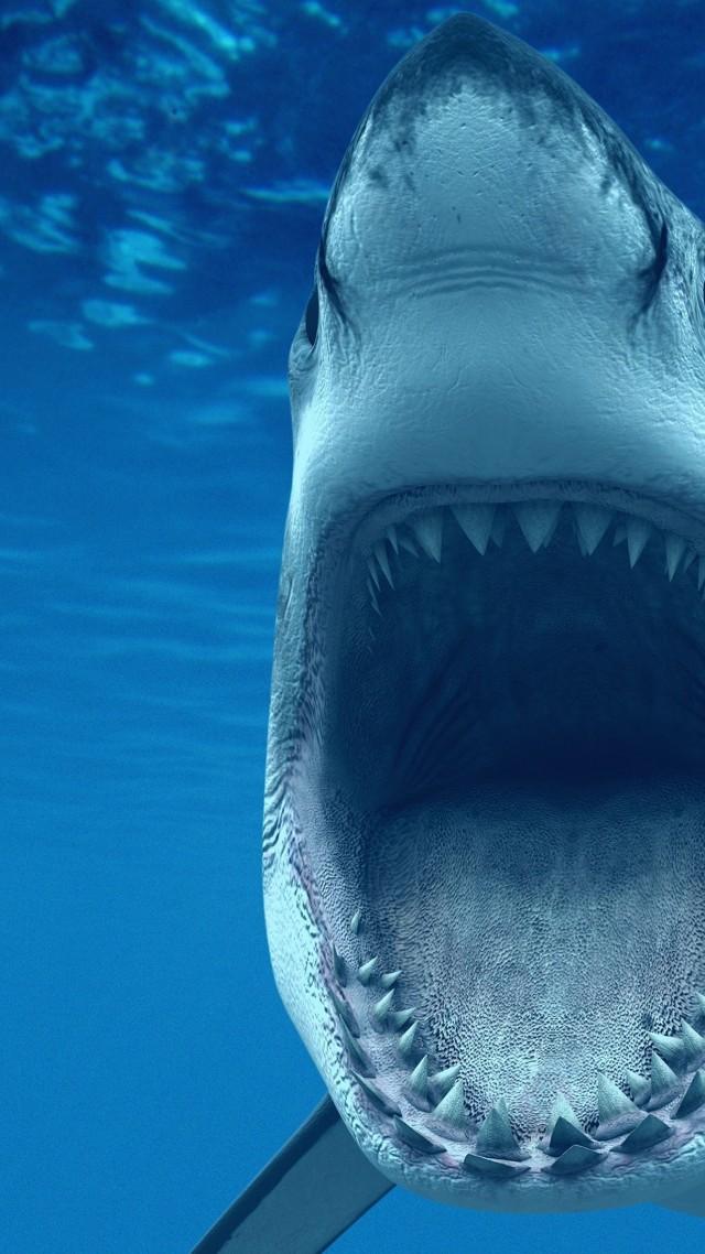 Wallpaper White Shark 4k Hd Wallpaper Caribbean Great