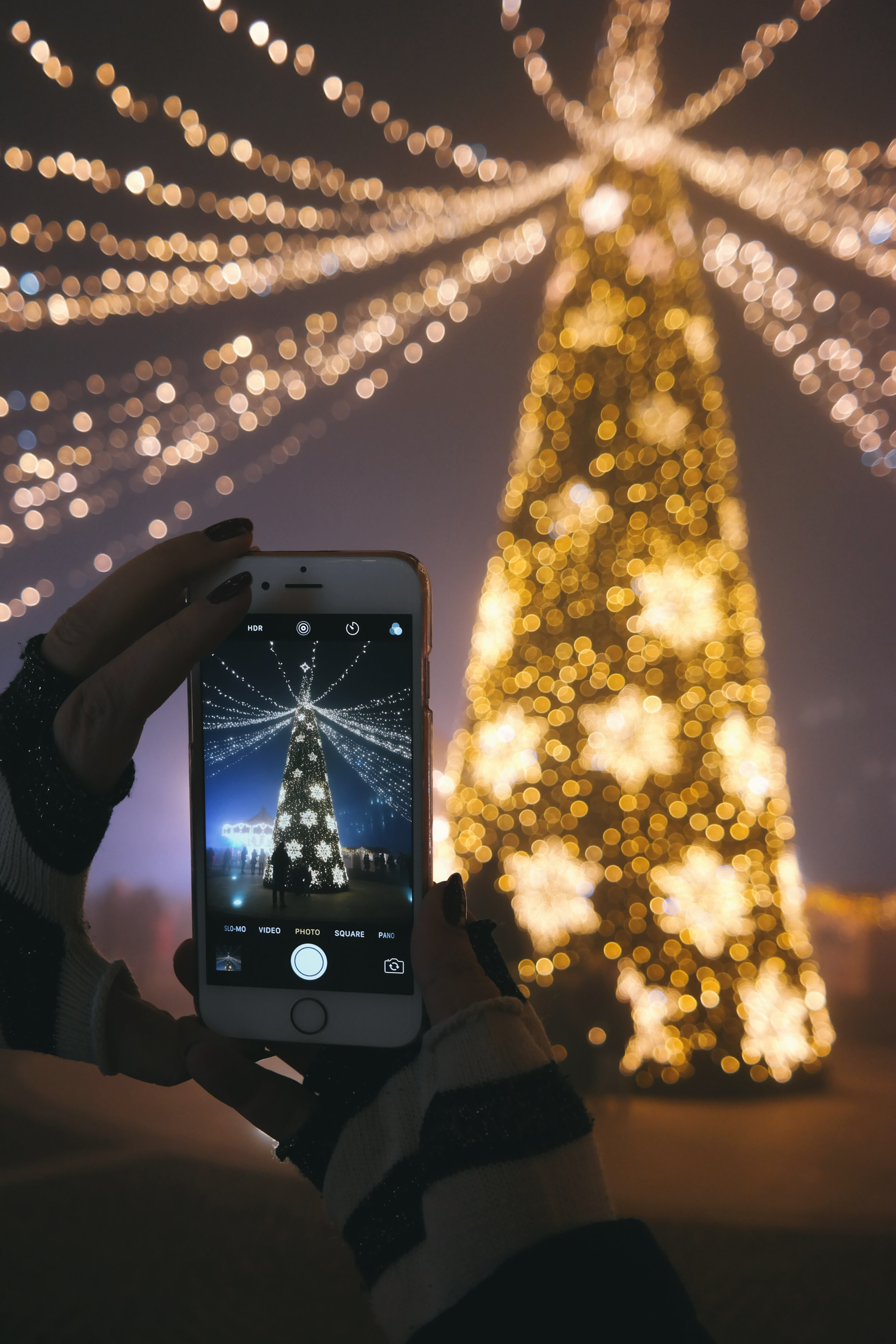 Person Holding Iphone 6 Taking Photo Of Christmas Tree