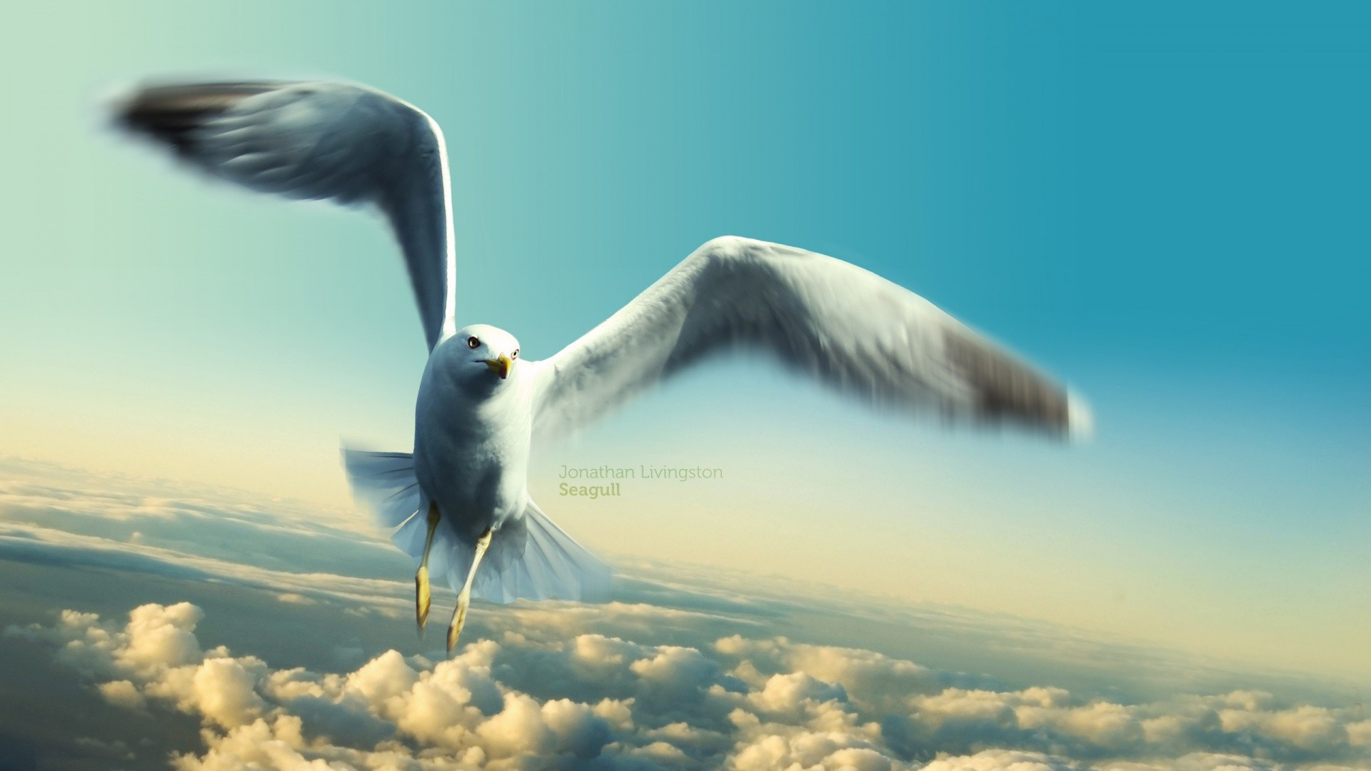 Flight Bird Seagull Clouds Livingston Jonathan Cute Fernao