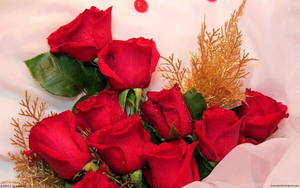 Roses For Womens Day , HD Wallpaper & Backgrounds