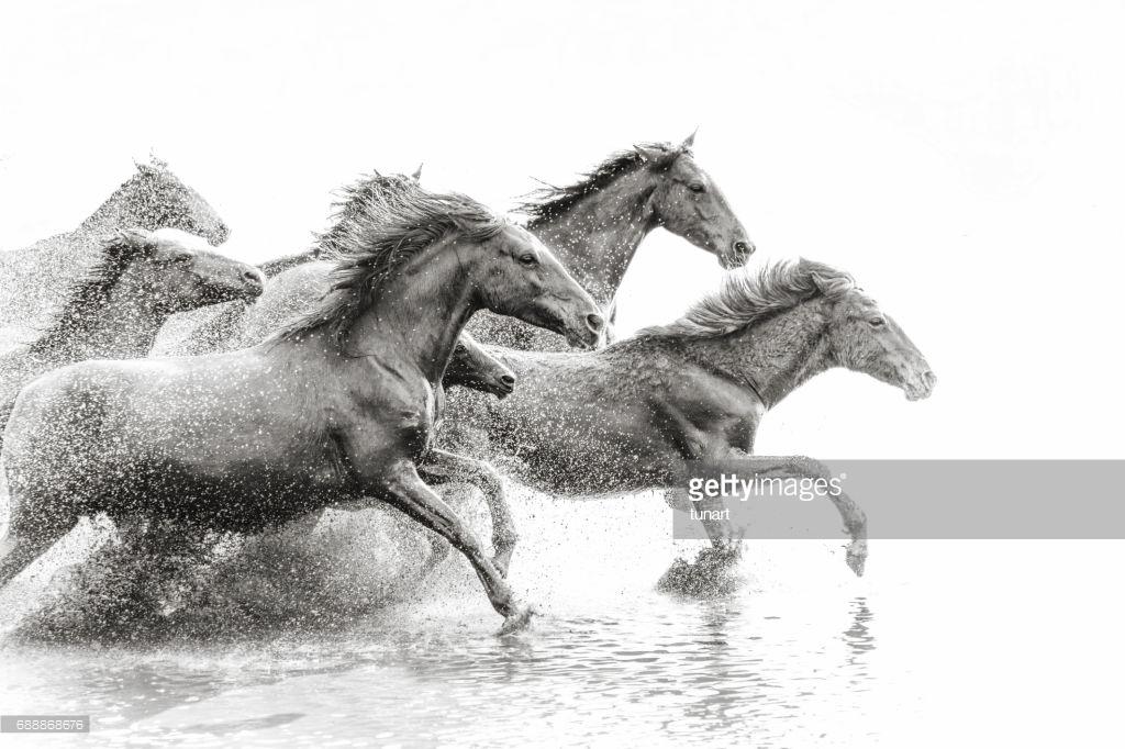 Seven Black And White Horses Running Wild 1388454 Hd
