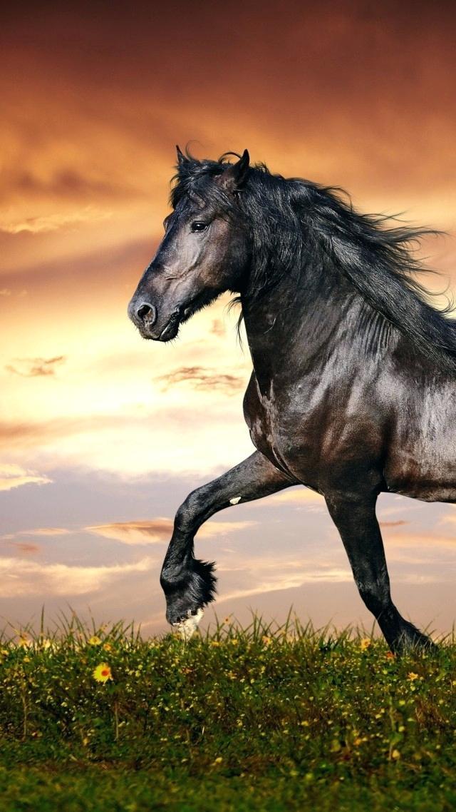 Horse Wallpaper Sunset Horse Wallpaper Hooves Mane Horses