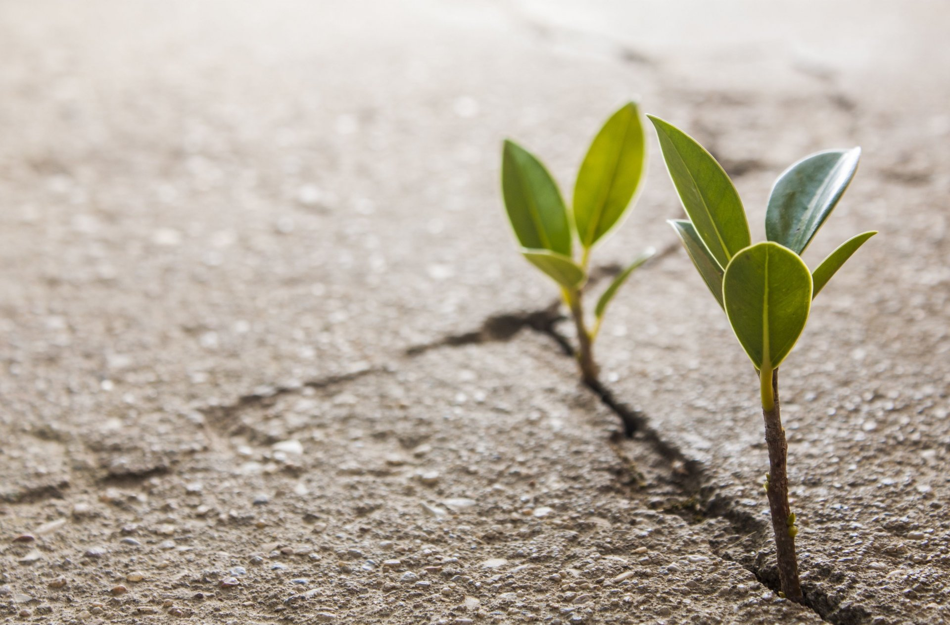 Our Services Close Up Plant Leaf The Germ Leaves Crack - Plant Growing In Concrete , HD Wallpaper & Backgrounds