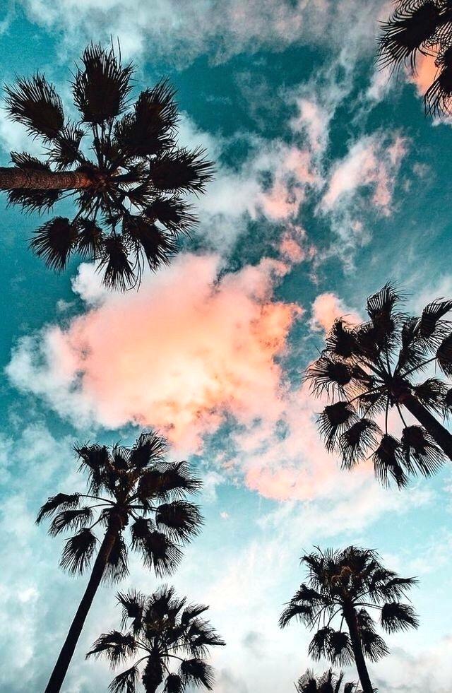 Palm Trees Tumblr Iphone Wallpapers California Palm Para