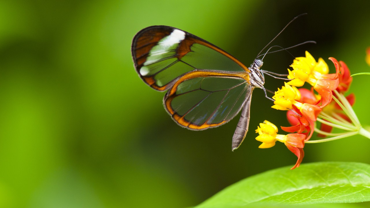 Wallpaper Butterfly, 5k, 4k Wallpaper, Insects, Flowers, - Flower With Butterfly Wallpaper Hd , HD Wallpaper & Backgrounds