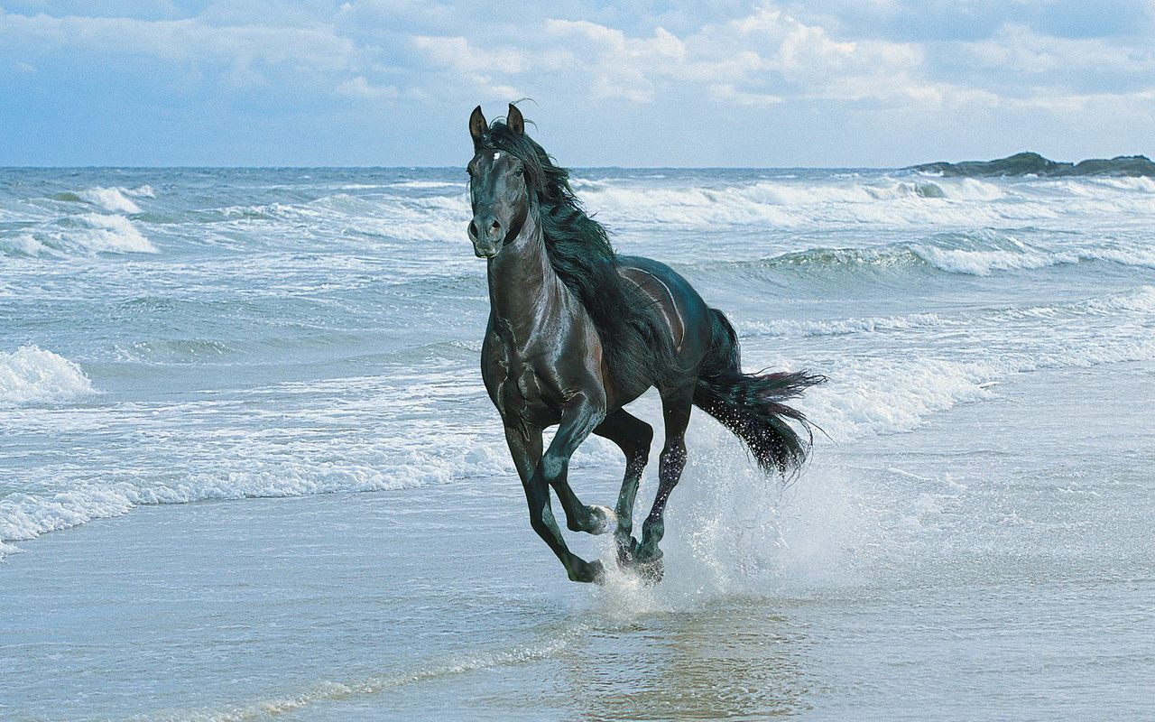 Beautiful Horse Black Horses Running On The Beach 140332 Hd Wallpaper Backgrounds Download