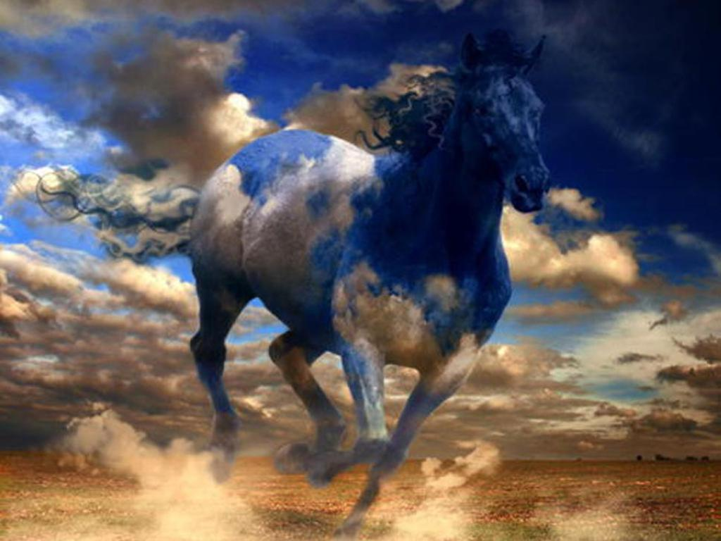 Free Horse Wallpaper Free Horse 141765 Hd Wallpaper