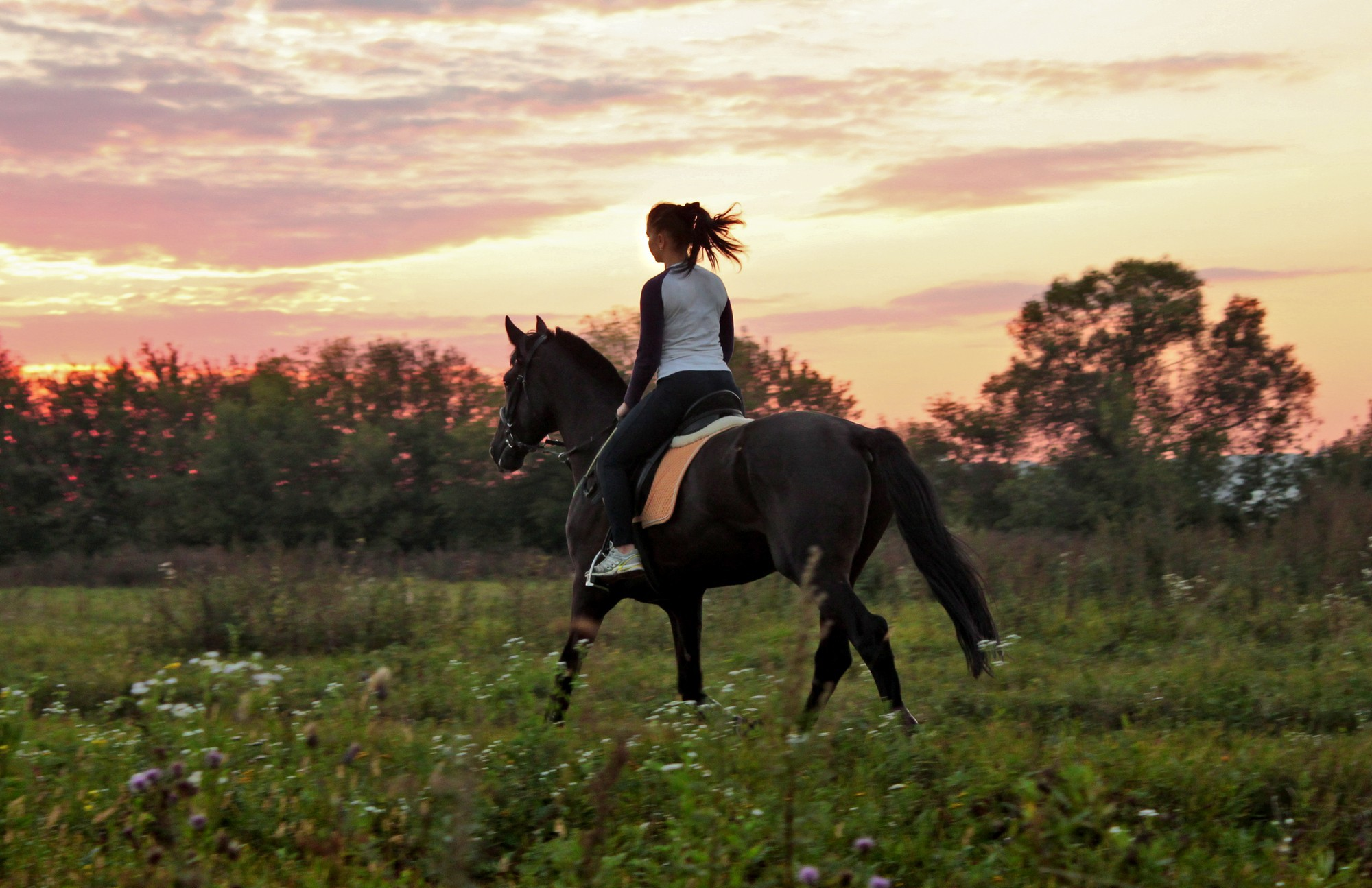 Horse Riding Wallpapers Horse Riding In Nature 142561 Hd Wallpaper Backgrounds Download