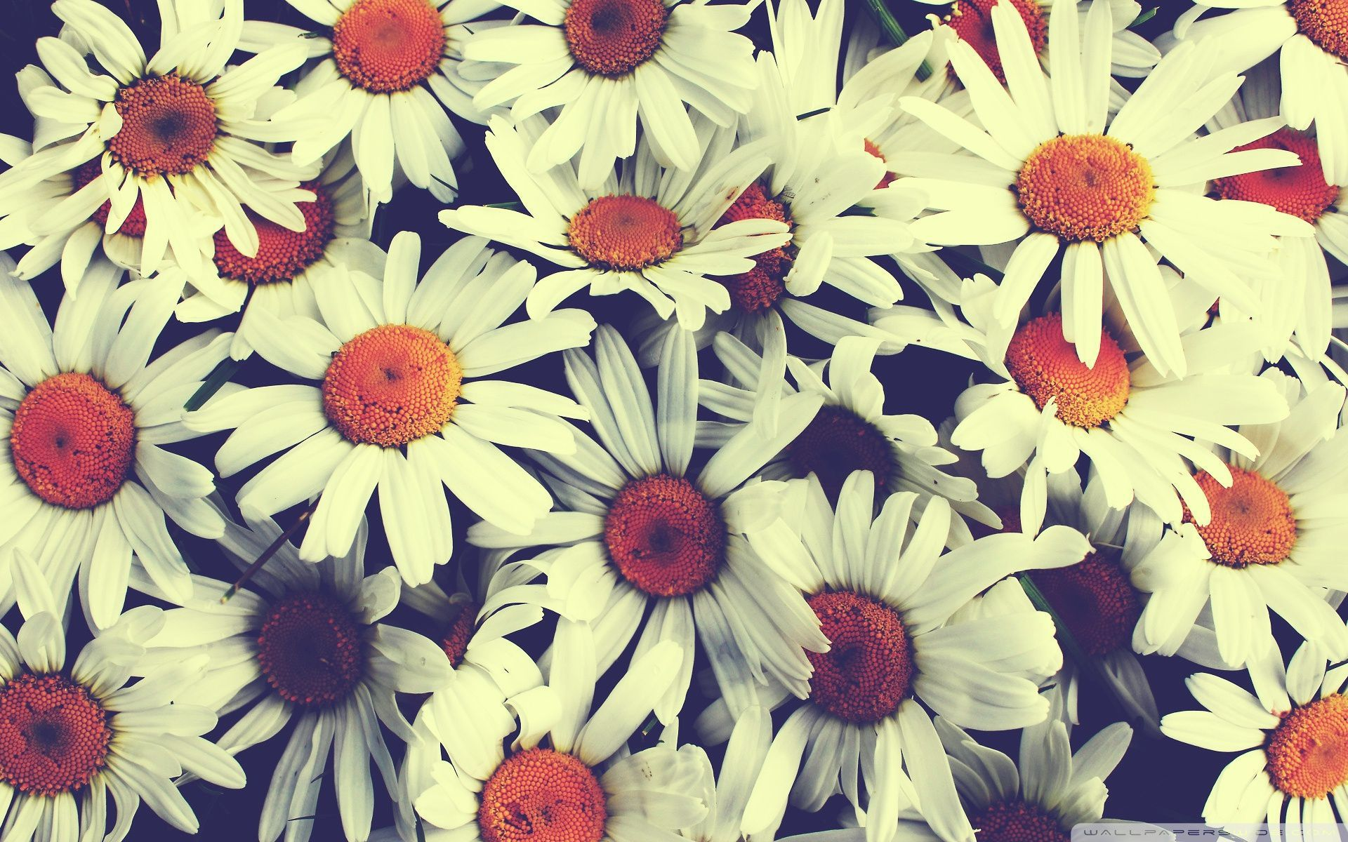 Vintage Flower Wallpaper Desktop Backgrounds Flowers