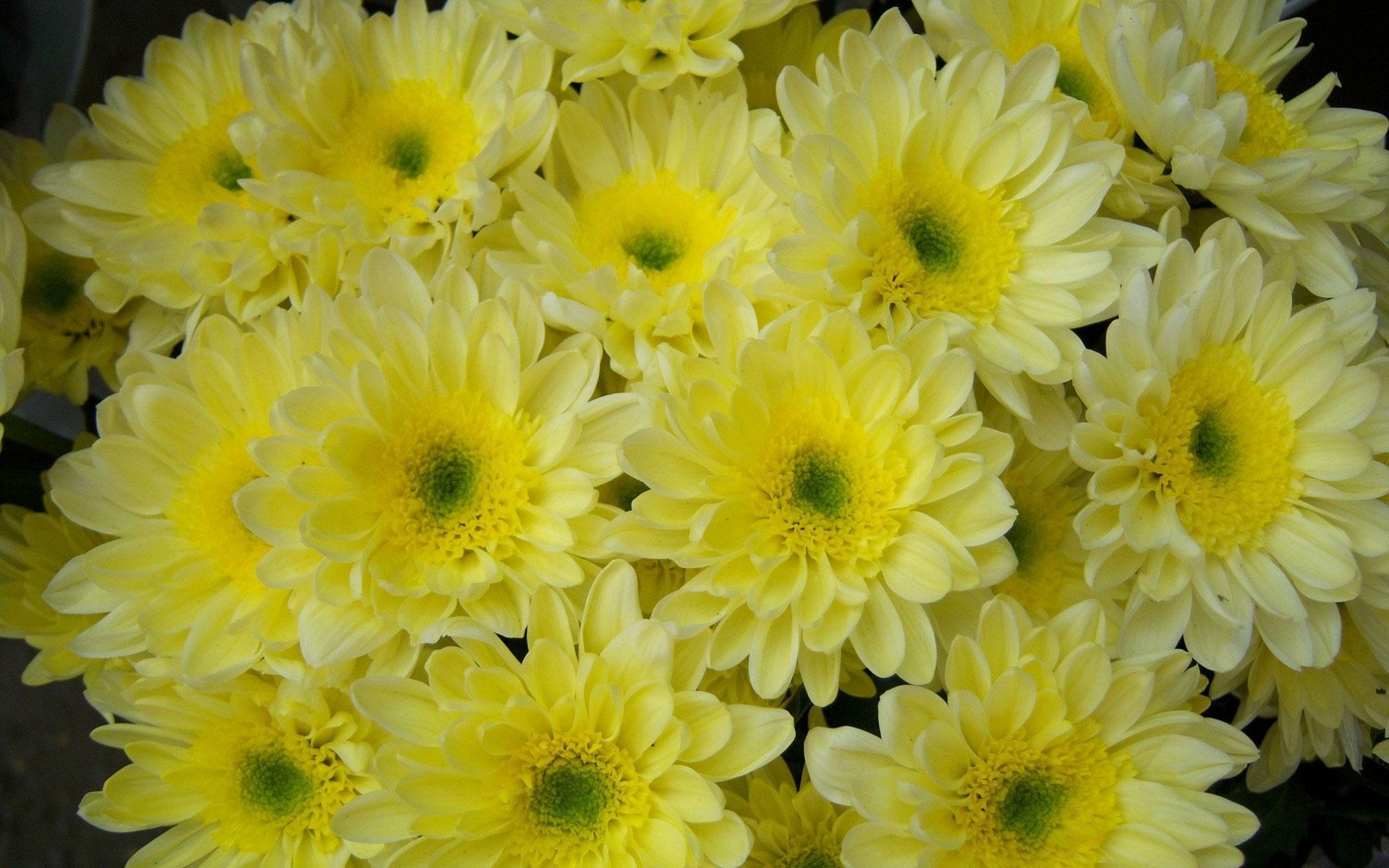 Wallpaper Nature Flower - Yellow Colour Flower Hd , HD Wallpaper & Backgrounds
