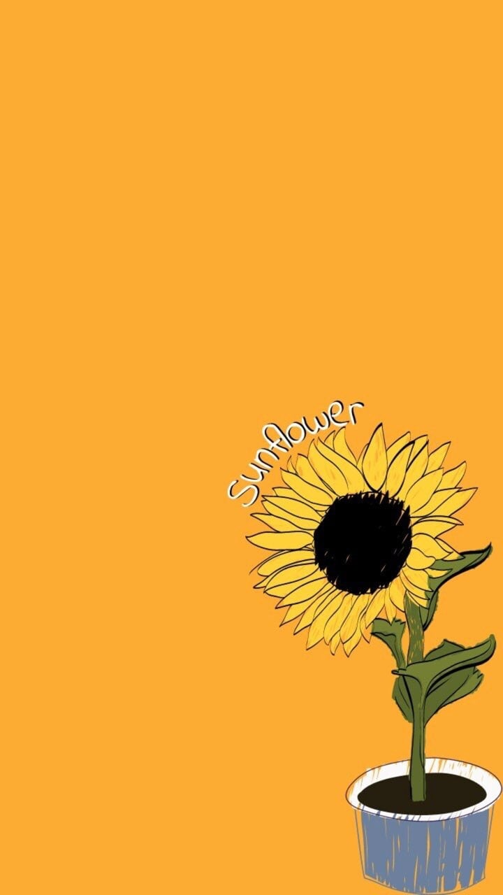 Aesthetic Yellow Sunflower Background (144360) , HD
