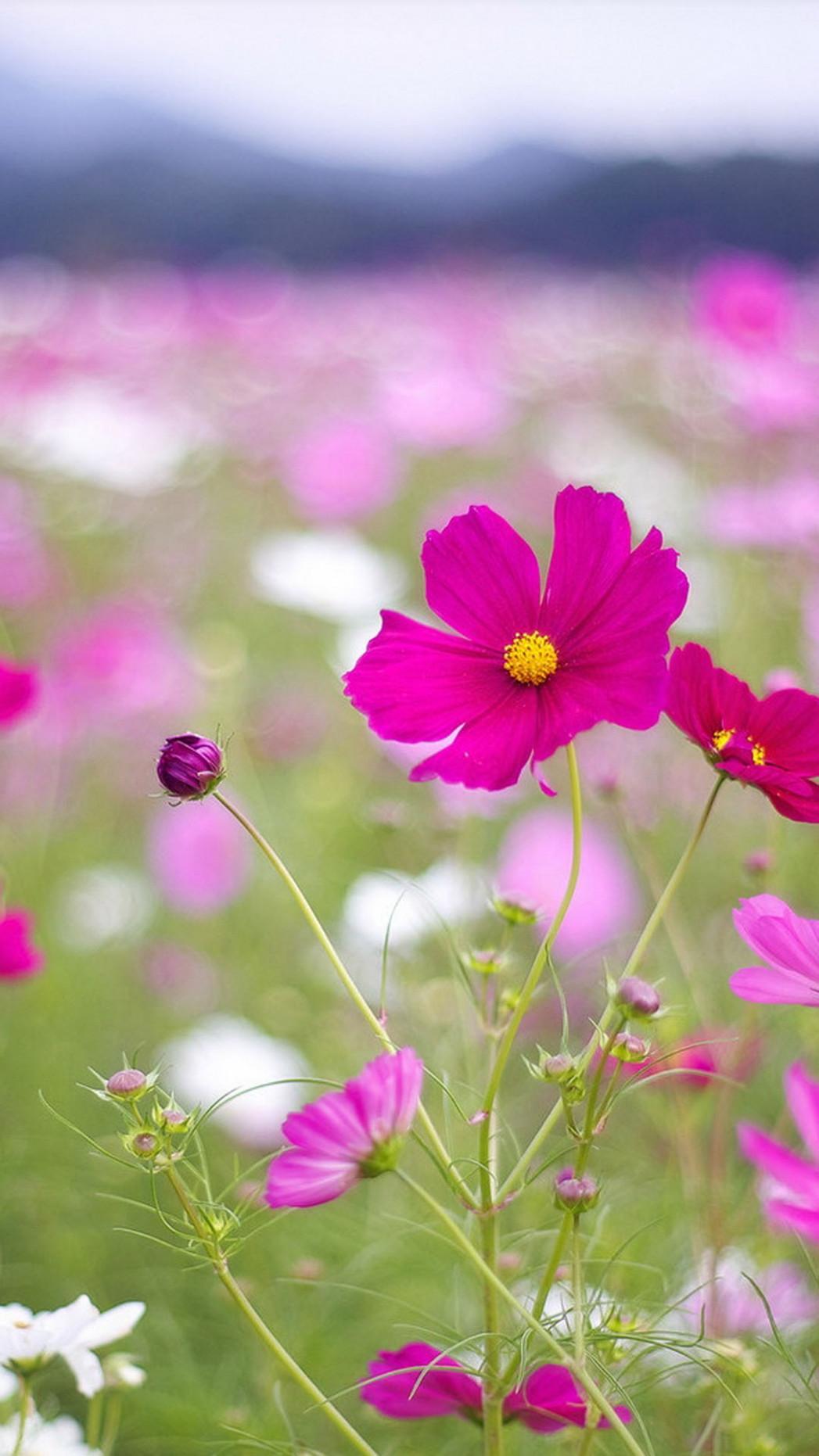 Beautiful Flowers Htc One Wallpaper Best Htc One Wallpapers - Beautiful Wallpapers For Mobile , HD Wallpaper & Backgrounds