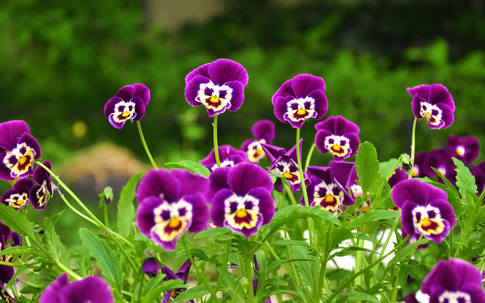 Montessori Botany - Strange Flower , HD Wallpaper & Backgrounds