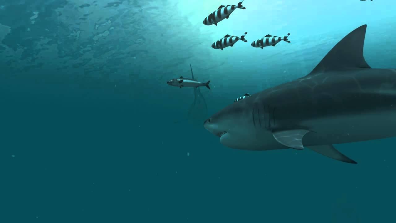 14 144935 sharks 3d live wallpaper and screensaver moving shark