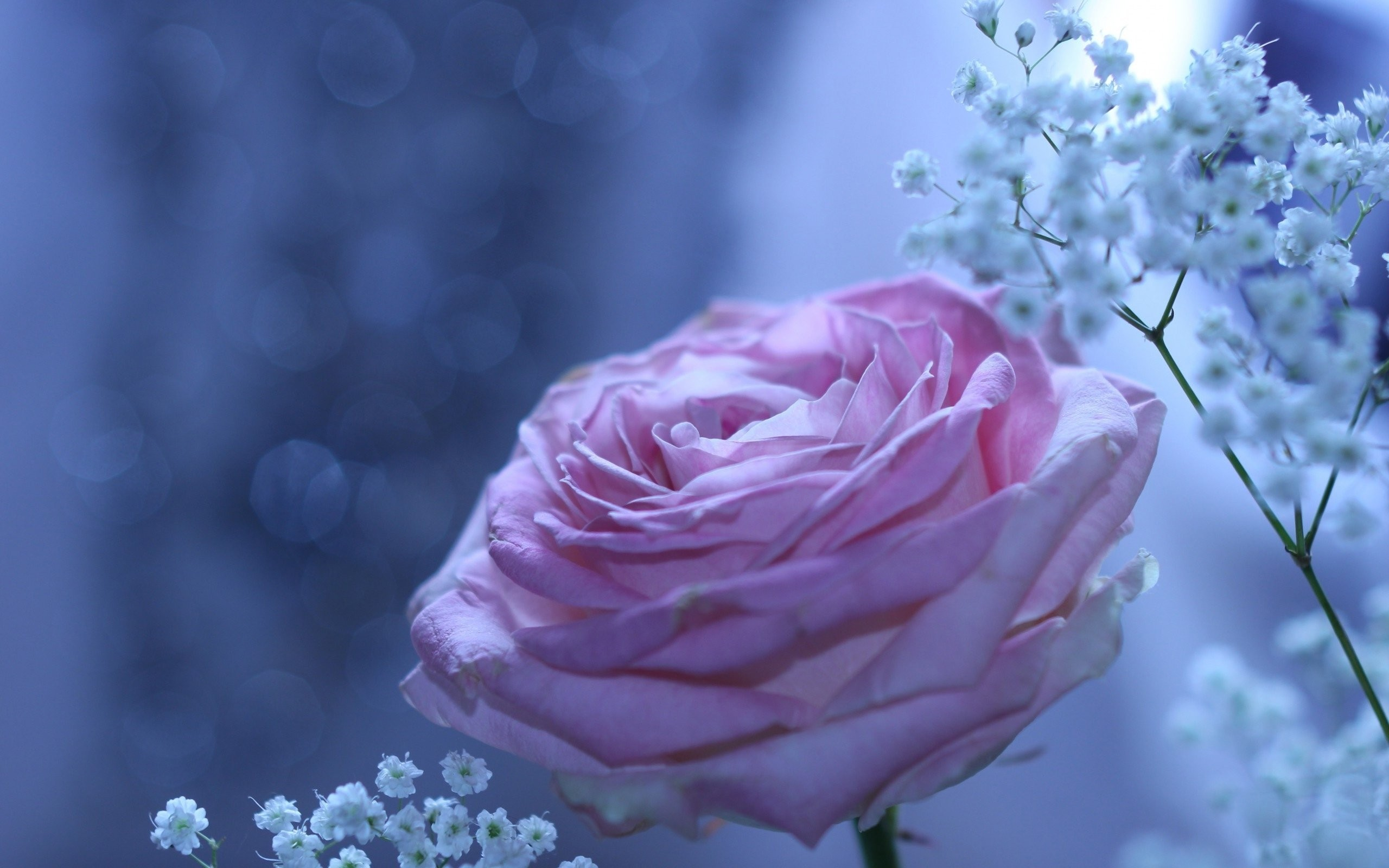 Smells,rose, Beautiful, Flower, Wallpaper,cool Images, - Unique Beautiful Roses Wallpaper Hd , HD Wallpaper & Backgrounds