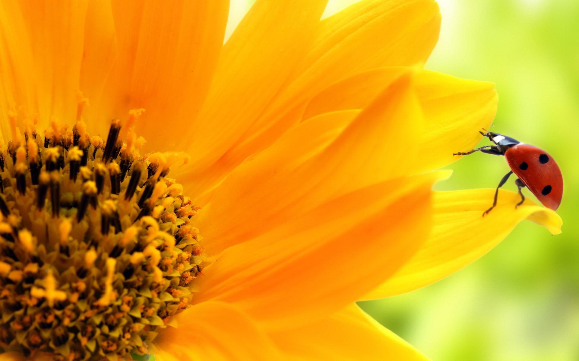 14 145520 sunflower wallpaper desktop background sun flowers