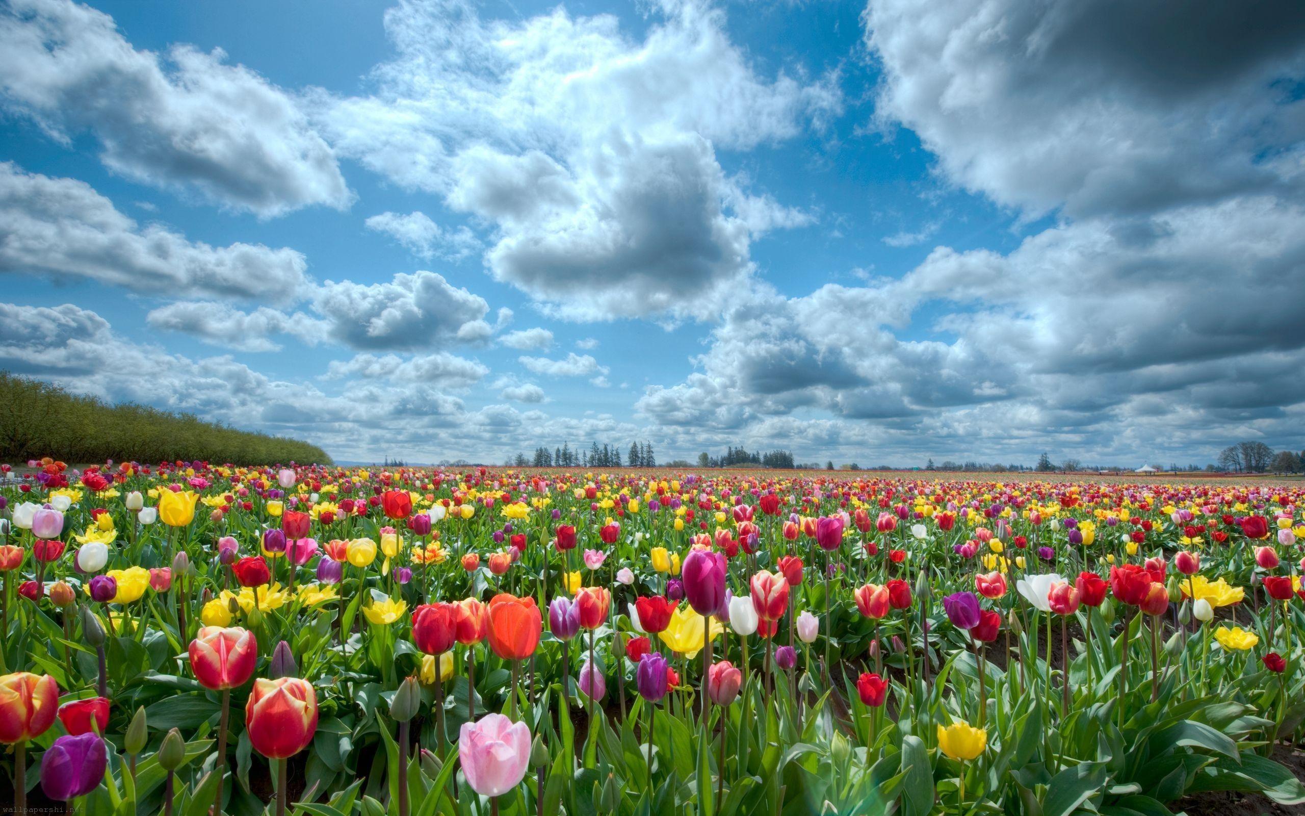 Nature Flowers - Flower Garden Backgrounds , HD Wallpaper & Backgrounds