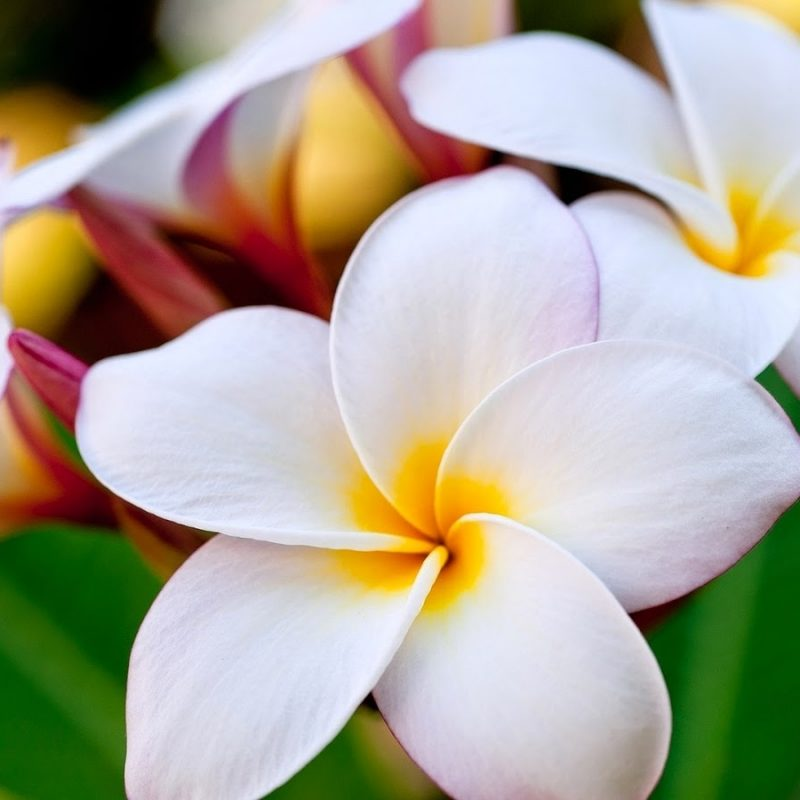10 Top Beautiful Flower Wallpapers For Desktop Full Full Screen Flowers Hd 146663 Hd Wallpaper Backgrounds Download