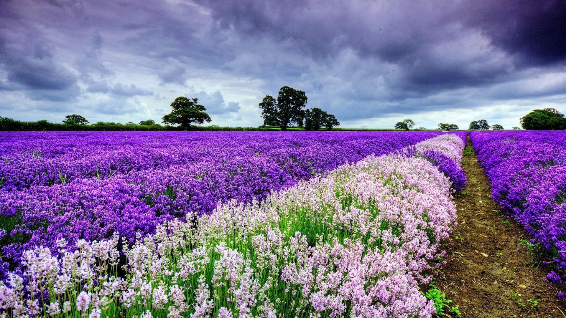 Spring Flowers Widescreen - 4k Ultra Hd Nature , HD Wallpaper & Backgrounds