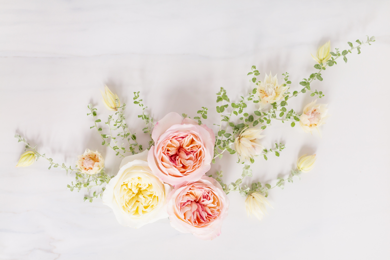 Digital Blooms May 2019 - Digital Blooms , HD Wallpaper & Backgrounds