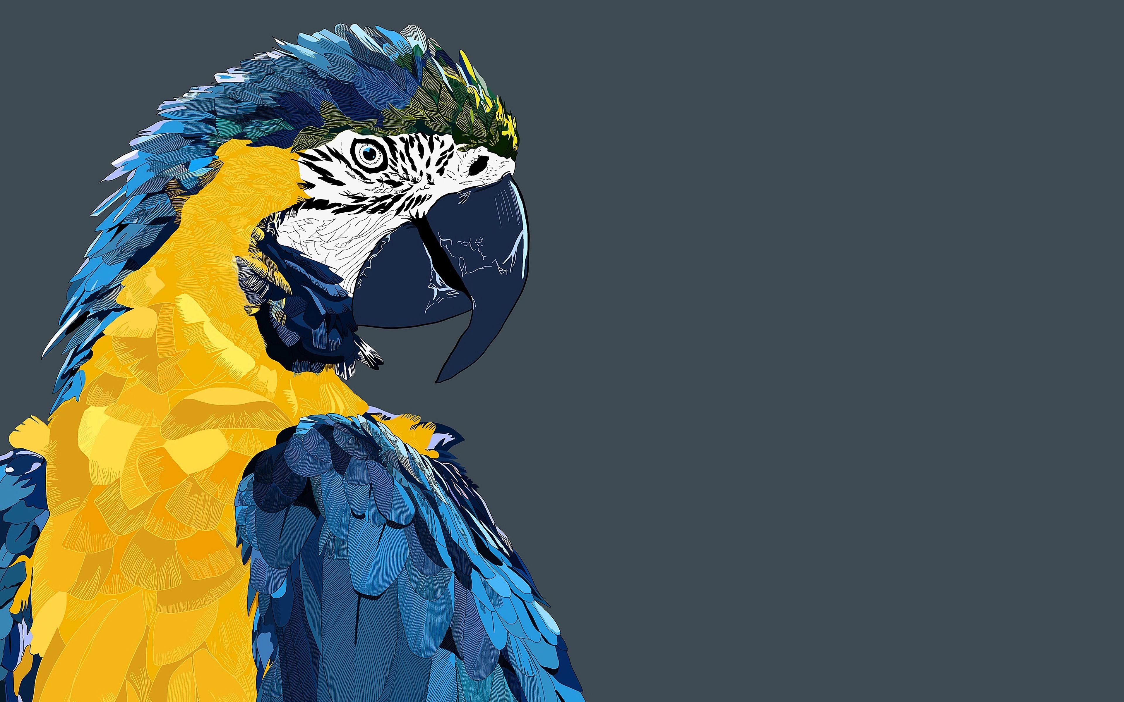 Low Poly Art, Macaw, Parrot, 4k, Birds, 3d Art - Art Wallpaper Birds , HD Wallpaper & Backgrounds