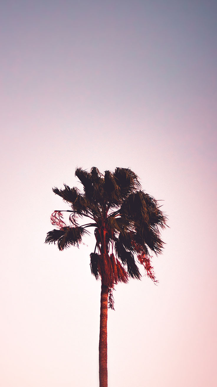 Palm Tree Iphone Wallpaper Collection By Www - Ikson Thinkin , HD Wallpaper & Backgrounds