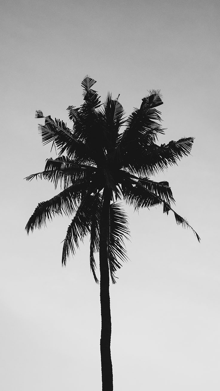 Palm Tree Iphone Wallpaper Collection By Www Palm
